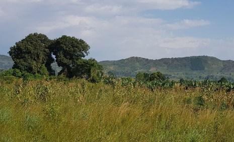 land4